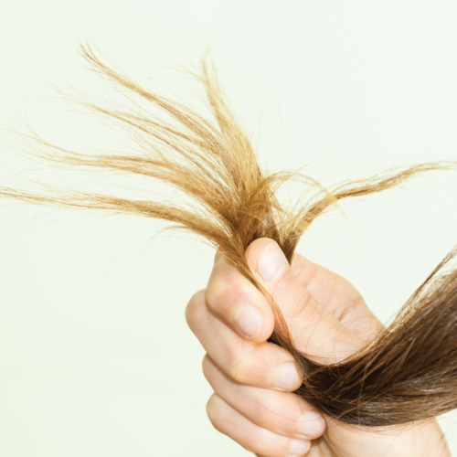 Did you know a single hair has a lifespan of about five years?